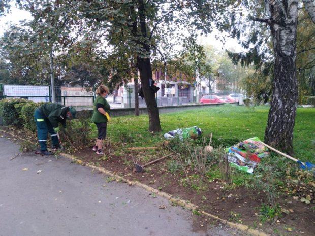 Зелено и у јесен
